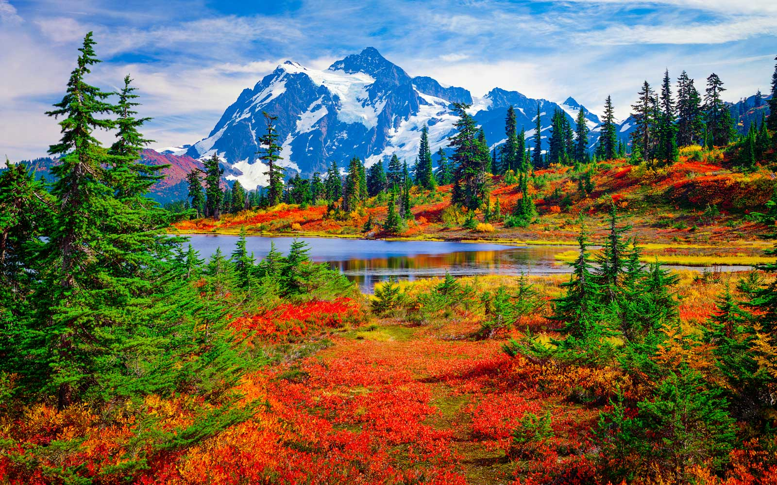 Red blueberry bushes adorn the grounds of North Cascades National Park in the fall.