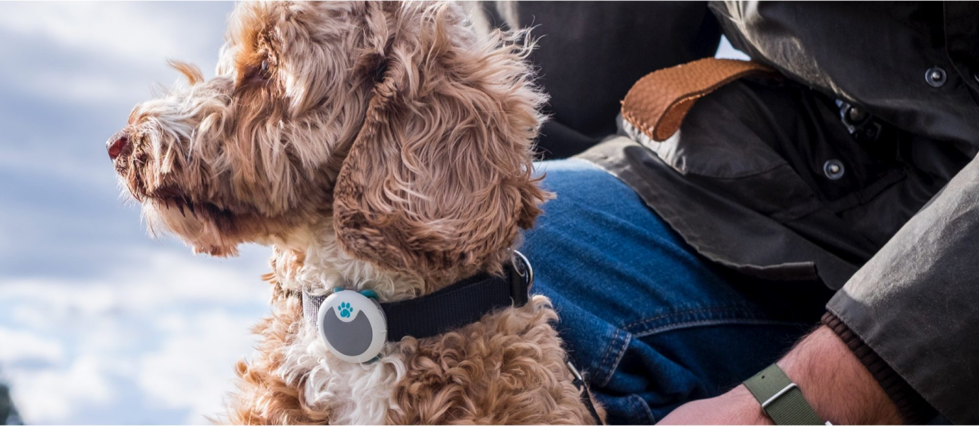 Sure PetCare Animo Activity Tracker and Behavior Monitor for Dogs