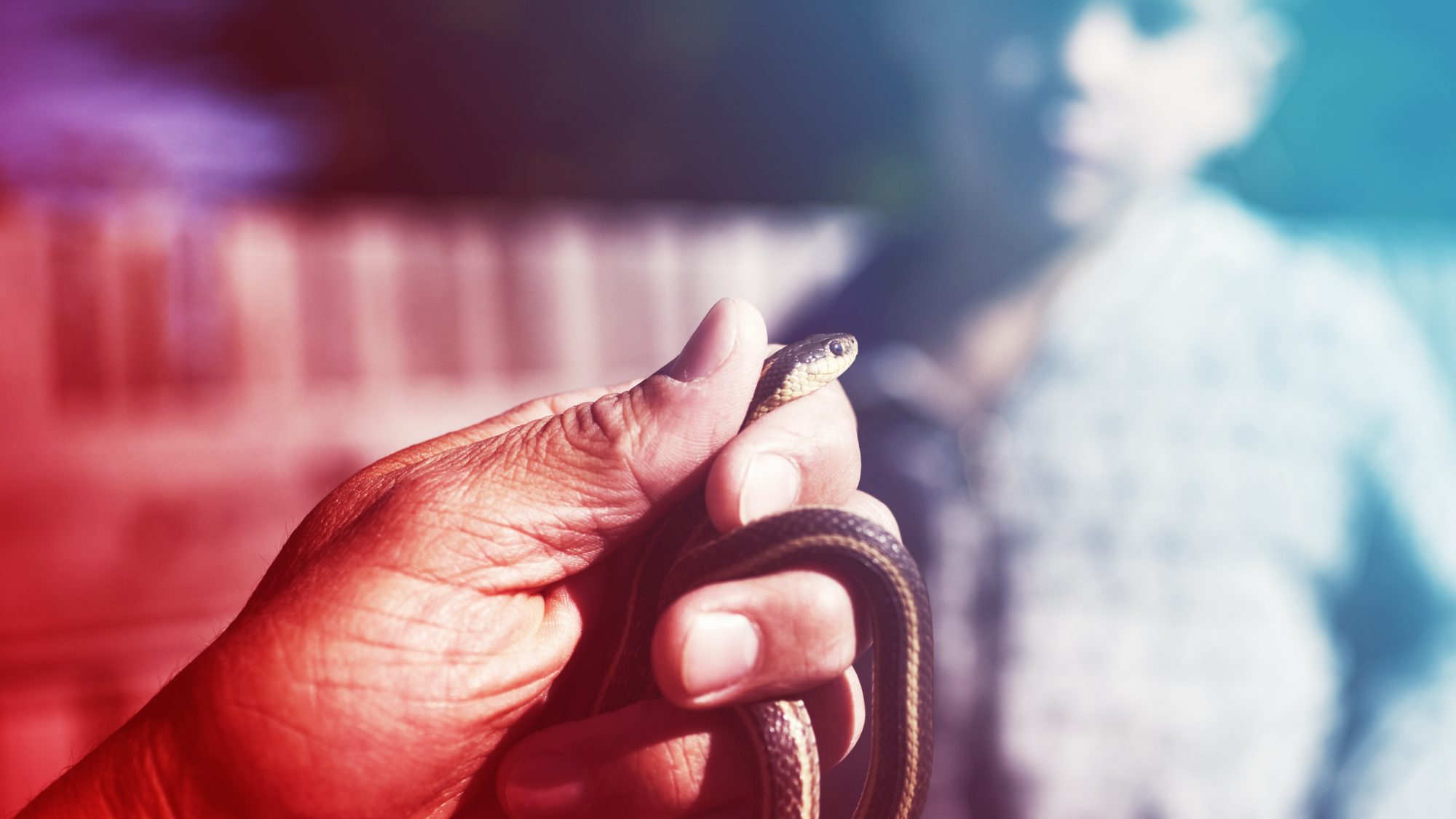 Snake-Bite-Lands-5-Year-Old-In-Hospital-Now-Mom-Warns-Other-Patients-AdobeStock_114211946