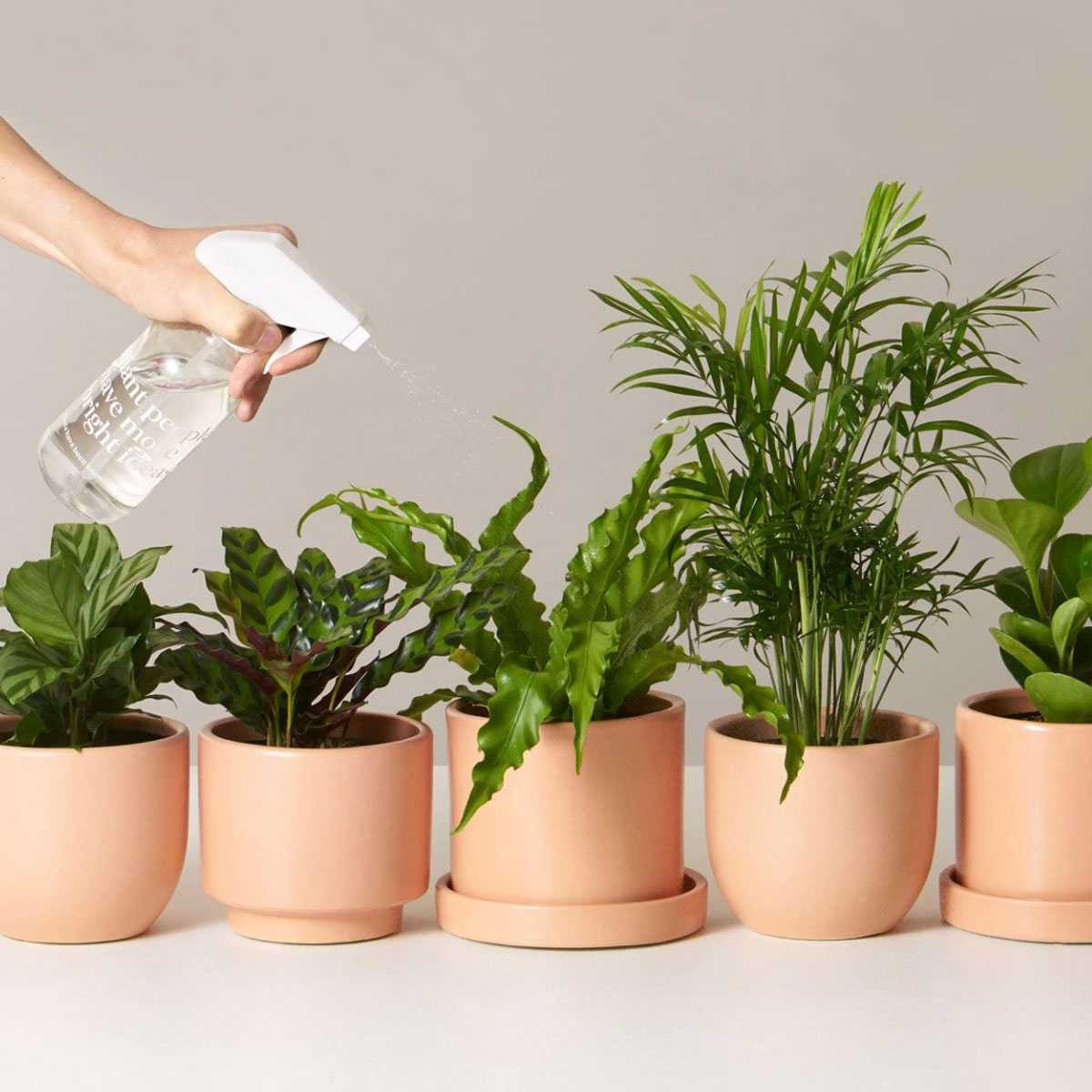 sill plant subscription