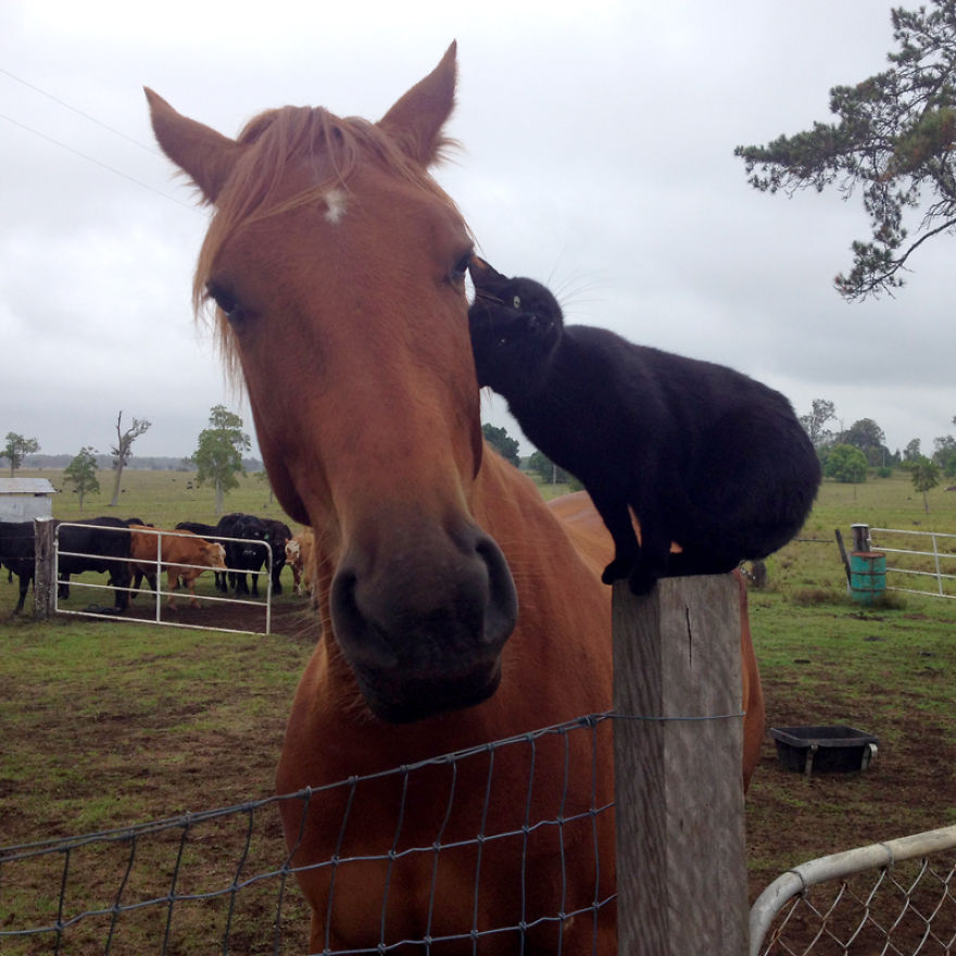 My-cat-Morris-loves-to-go-horse-riding-__880