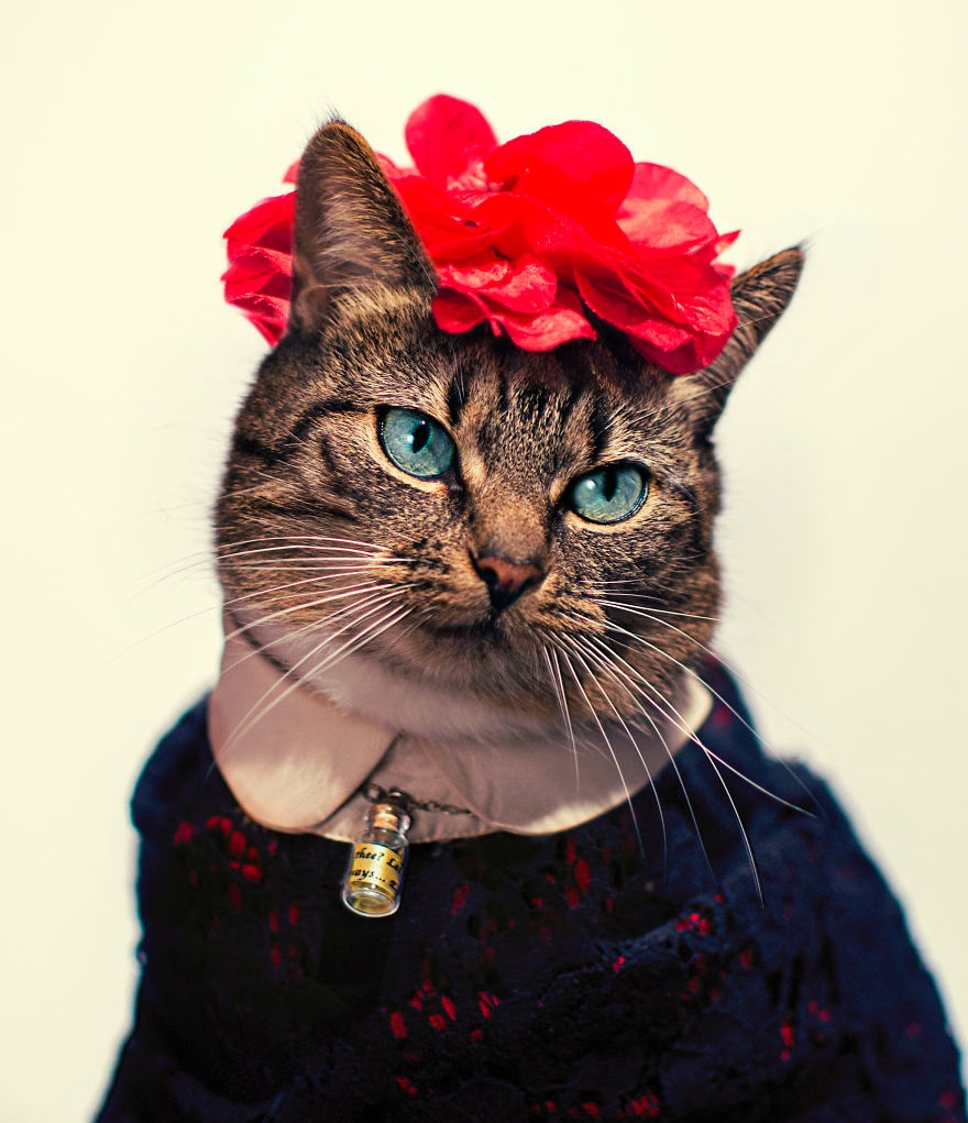 Photographer-takes-amazing-fashion-portraits-of-his-cat.__880