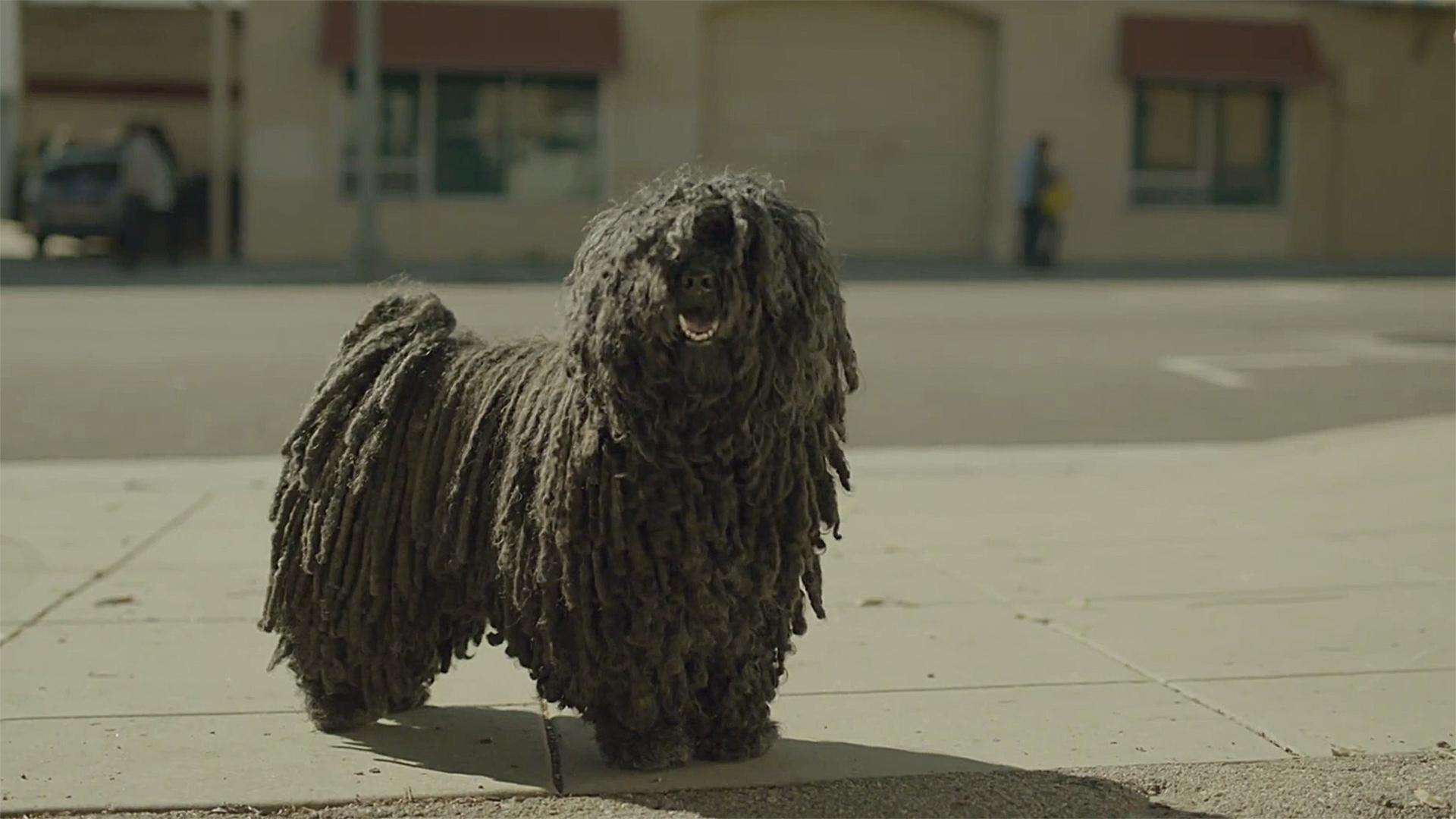 3040913-poster-p-2-mop-dog