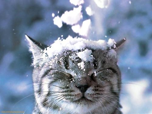 Winter-Wonderland-Tumblr-Theme-2