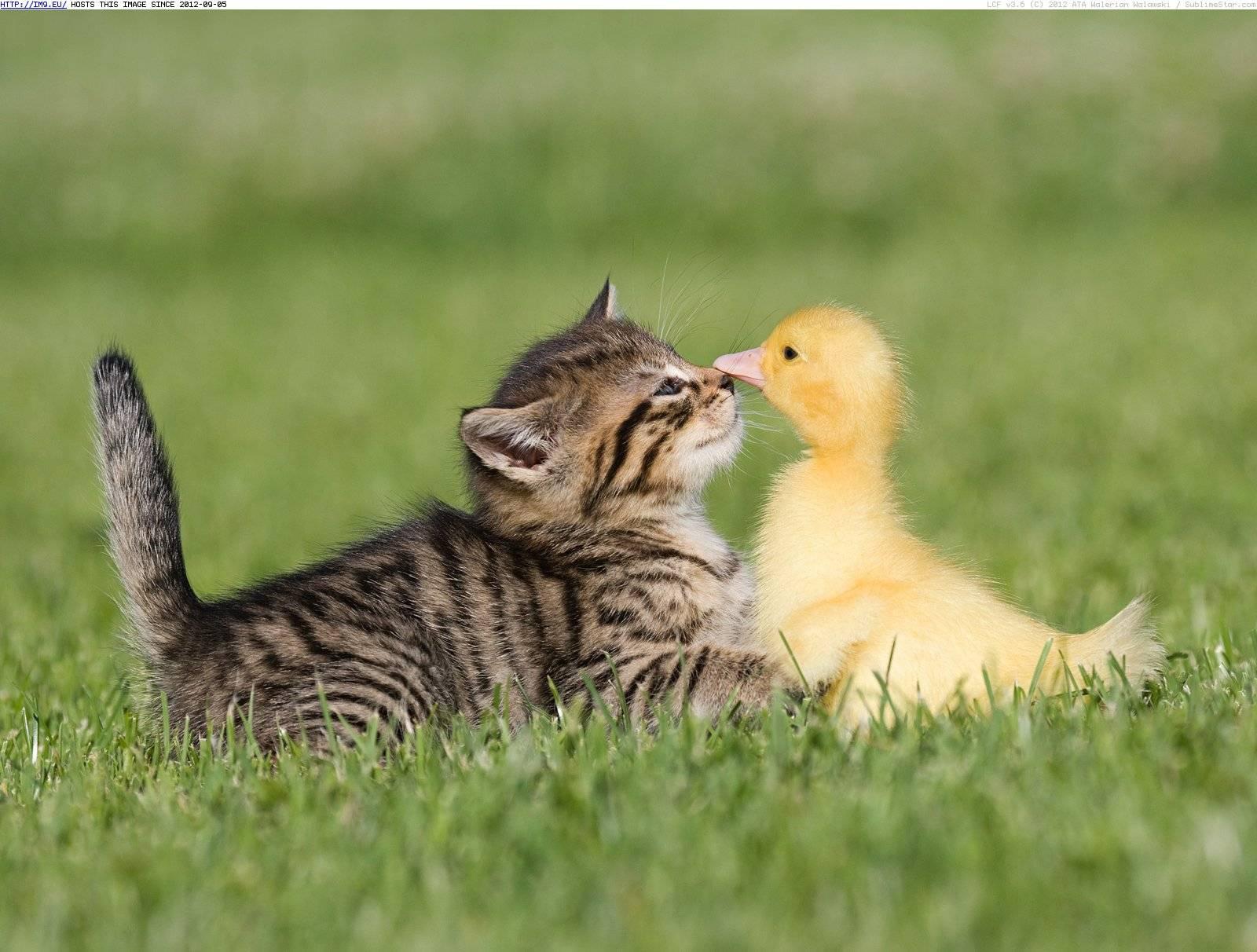 374890-baby-farm-animals-nose-to-nose