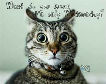 Wednesday Cat__372W