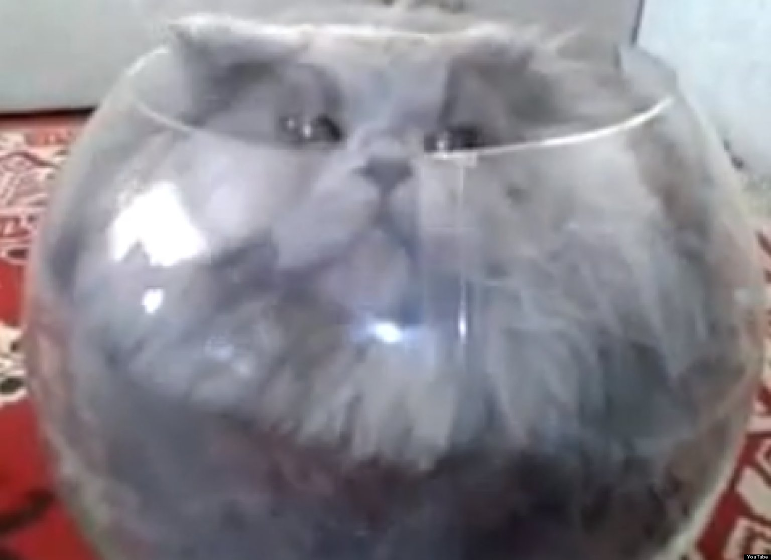 o-CAT-SQUEEZES-INTO-FISH-BOWL-facebook