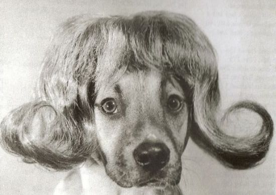 Dogs-with-wigs12