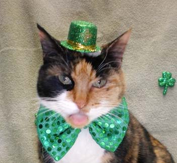 st-patricks-day-cat-thumb