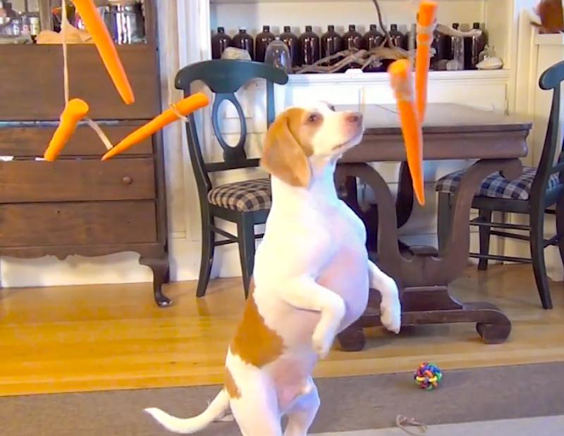flying carrots
