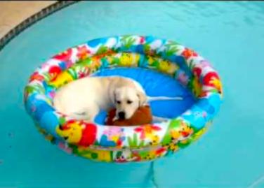 bdog at the pool
