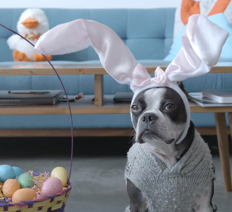 pups love Easter