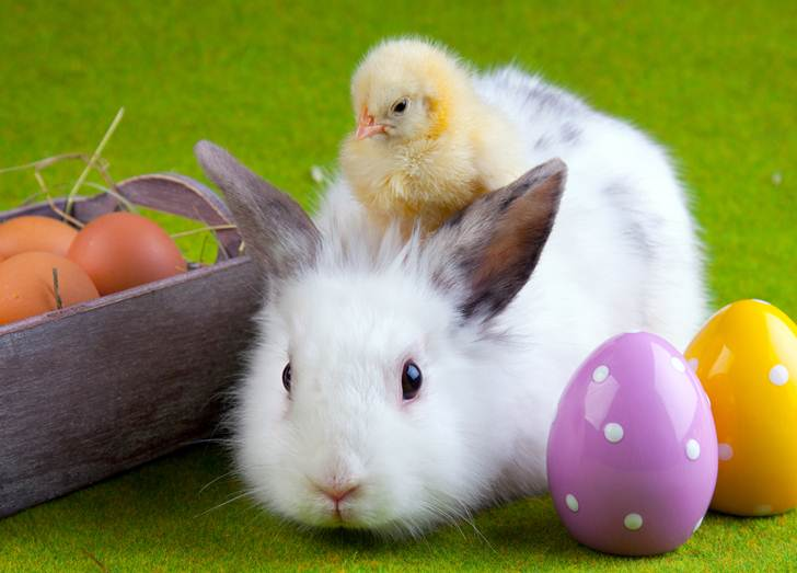 is-the-easter-bunny-real-12