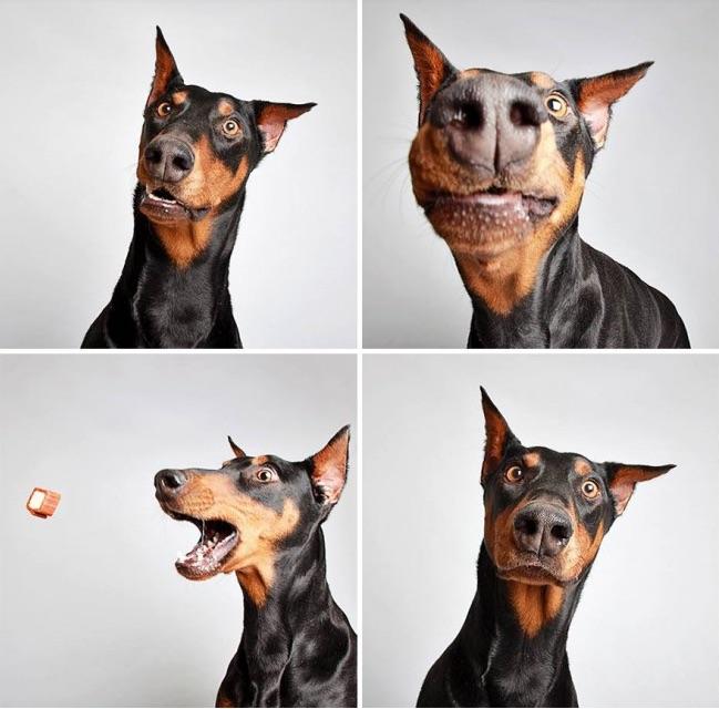 dogpic1