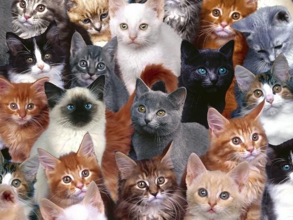 Cats-cats-28572014-1600-1200