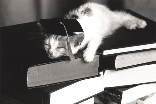 bw kitten