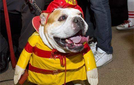 88395-dogs-firefighter