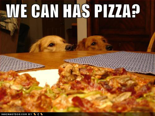 loldog-we-can-has-pizza