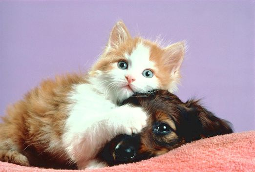 cat_and_dog02
