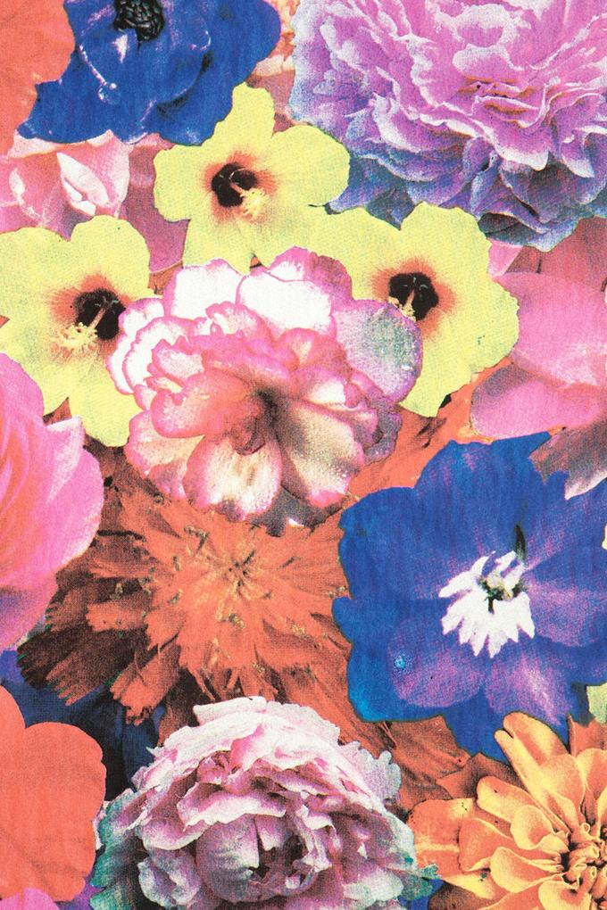 begonia-SMdetail