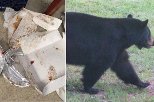bear and food