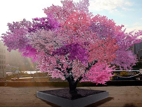 fruit-tree-600x450