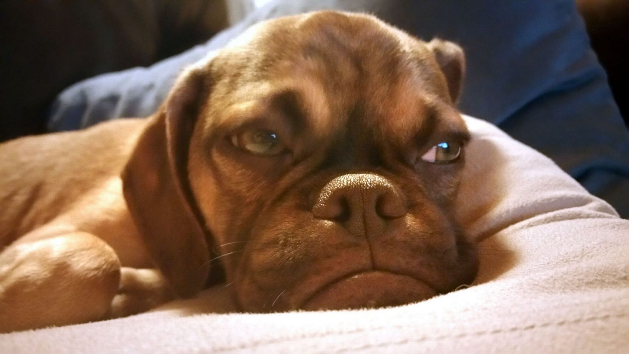 PAY-Grumpy-Earl-the-dog