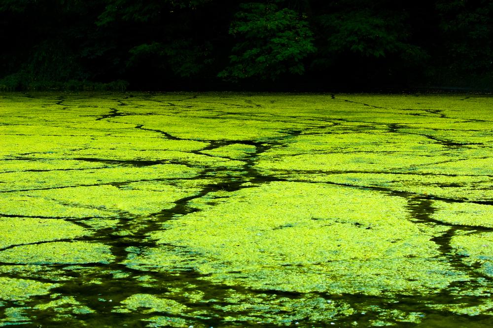 yoga algae