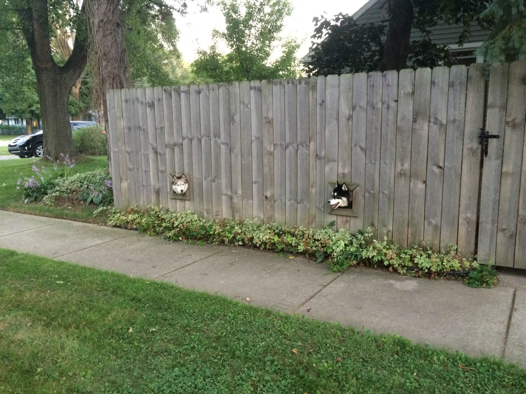 dogsinfence