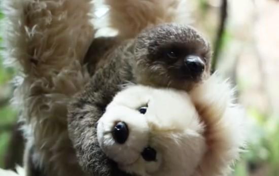 slothbear