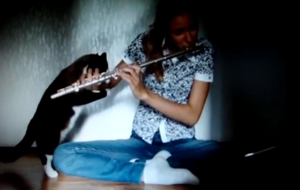 flute cat