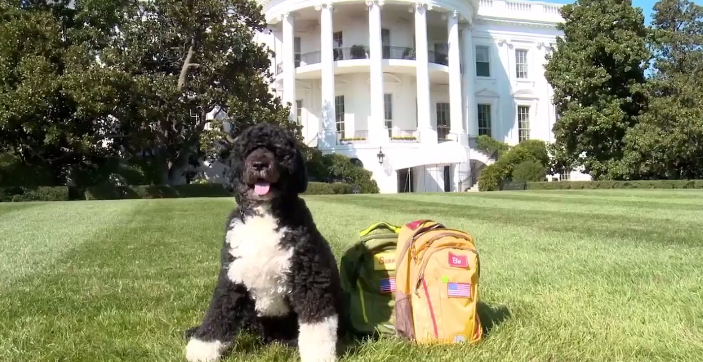 Picture of Bo and Sunny Obama Natural Disaster Video