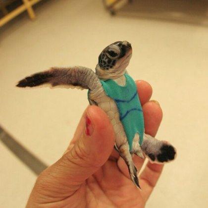 turtle nappy