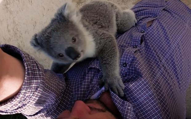 koalahug_3474310b