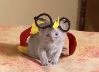 kittens_feat