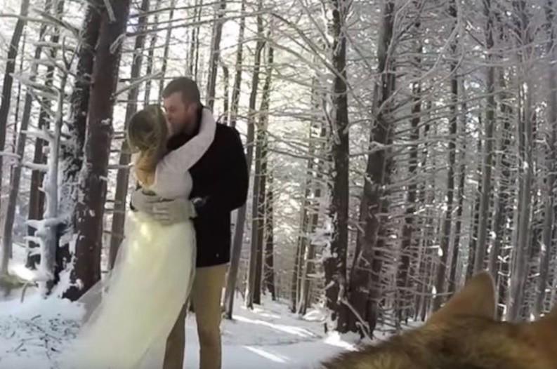 HT_go_pro_wedding_dog_ml_151124_31x13_1600-793x526