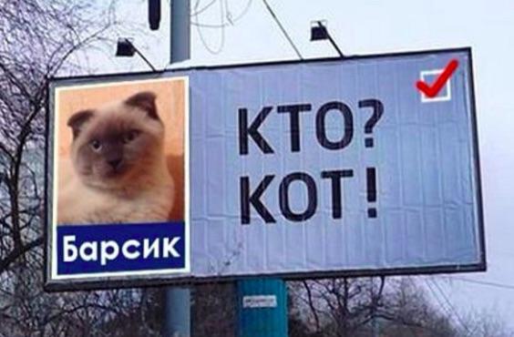 Barsik cat mayor