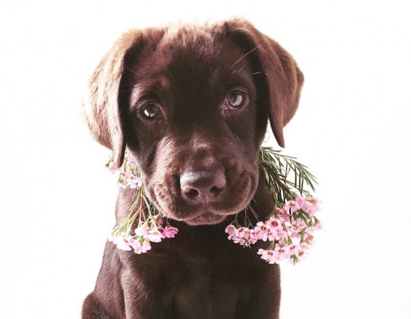 puppyflowers