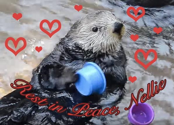 rip-nellie-the-otter