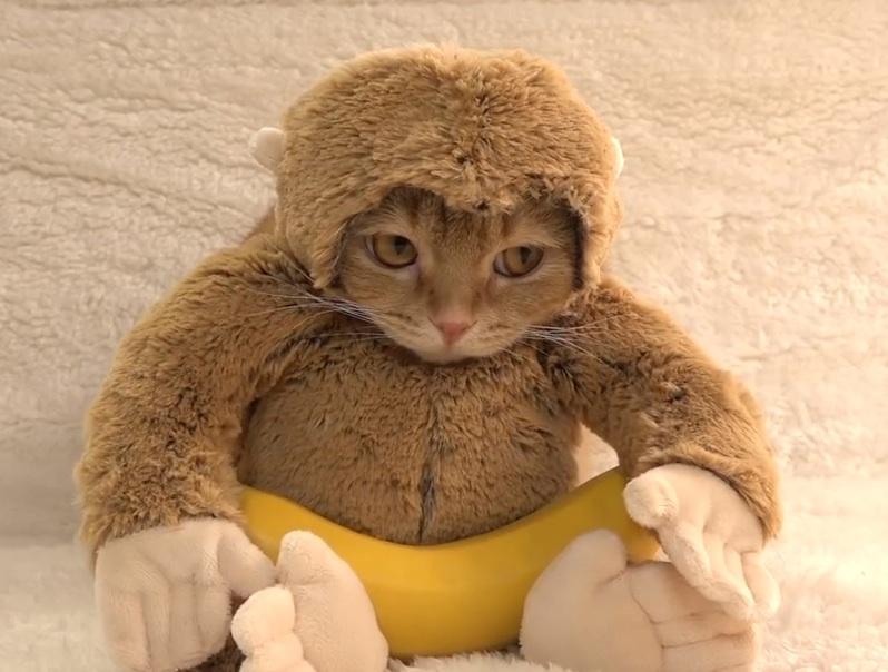 monkey cat