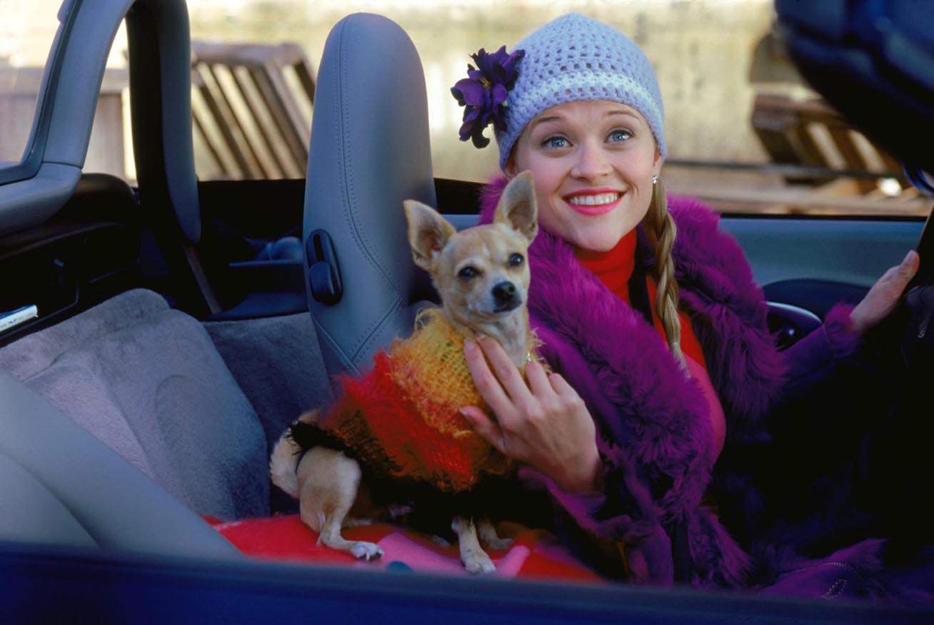 Picture of Elle Woods and Bruiser Legally Blonde