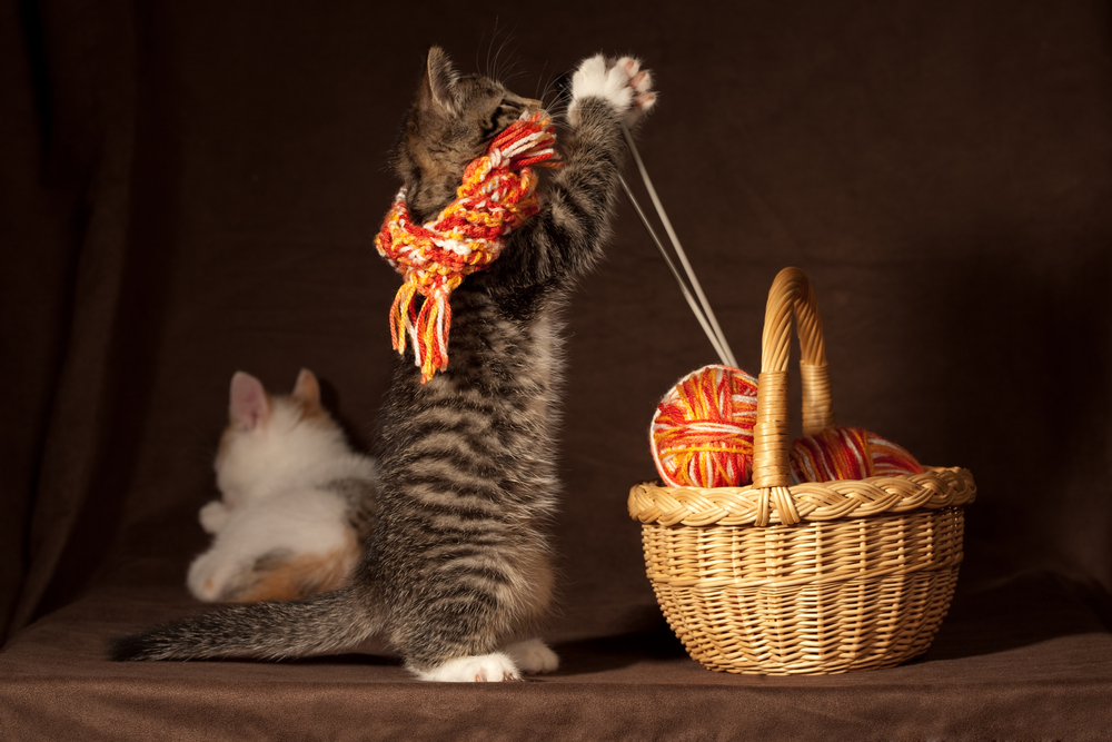 knitting kitten!
