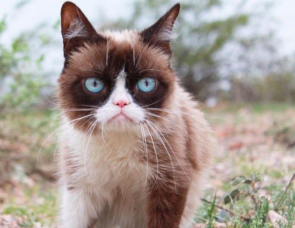 Grumpy Cat Interview