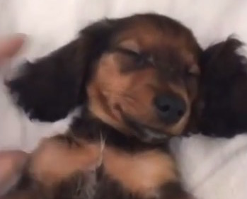 kylie-jenner-dog