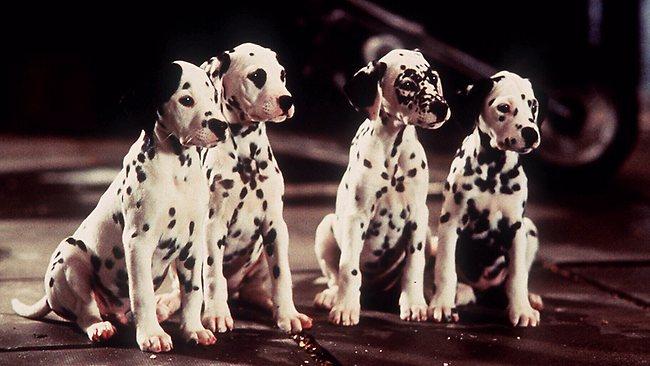 Dalmatian-Puppies-1996-3.jpg