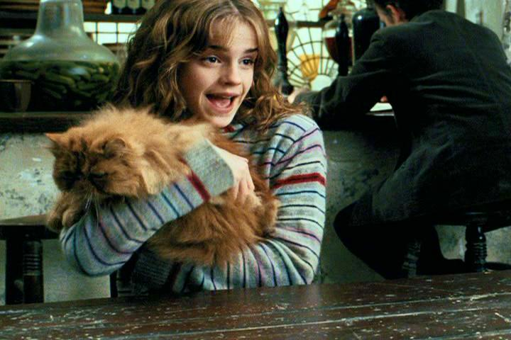 Picture of Hermione and Crookshanks