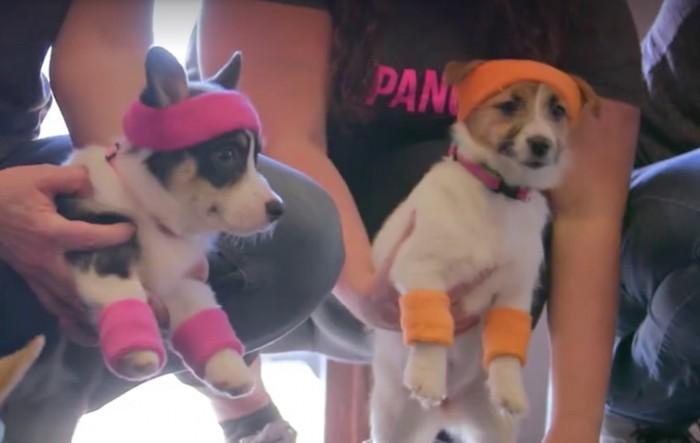 puppy ideo