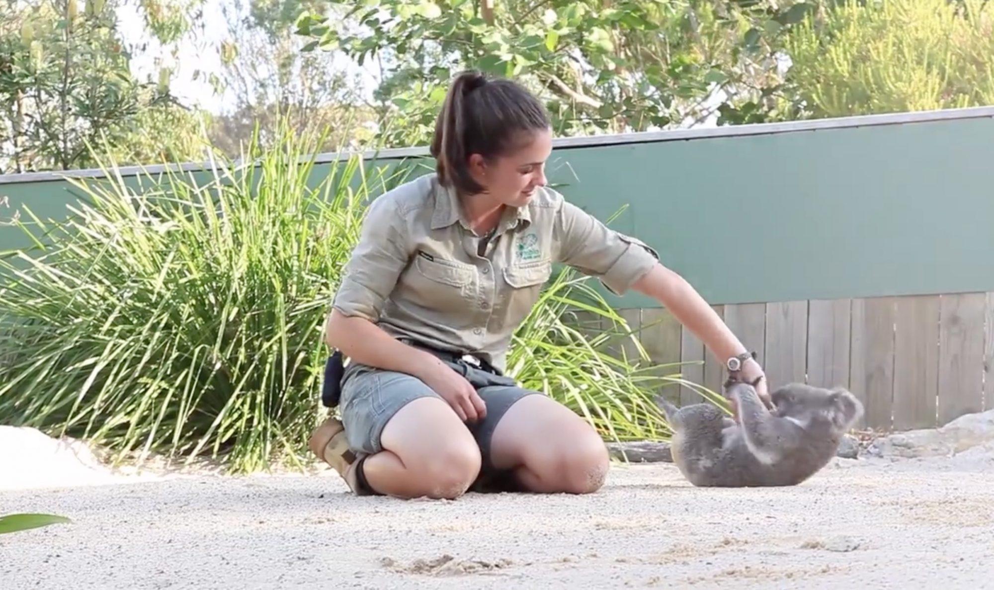 good-koala-1.jpg