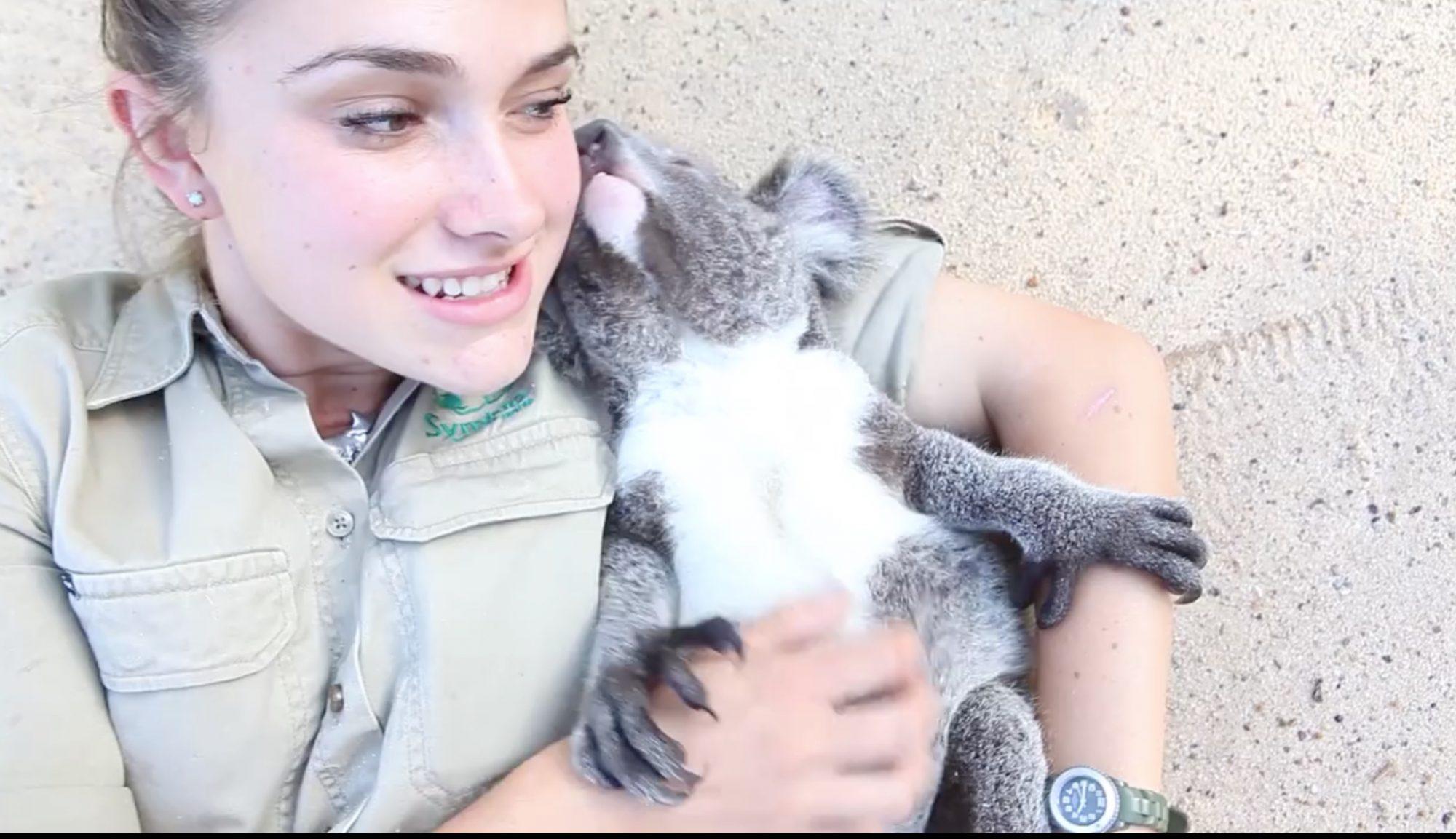 good-koala-4.jpg