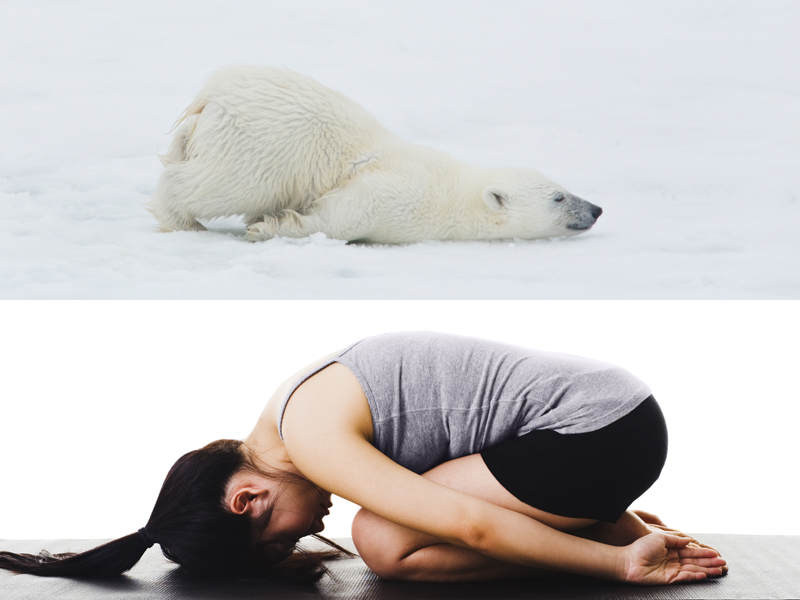 Here Are Some Bears Doing Yoga Because Why Not Hellogiggles